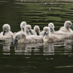 About Cygnet Cloud Name
